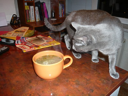 Chicken noodles soup and an unexpected guest